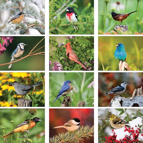 Monthly Scenes of Backyard Birds 2020 Wall Calendars