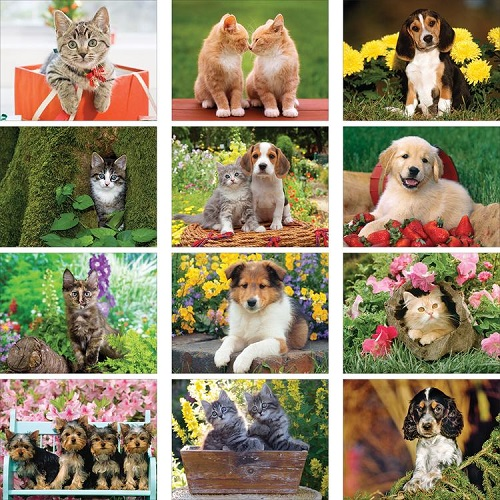 Monthly Scenes of Puppies & Kittens 2020 Wall Calendars