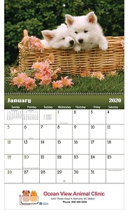 Puppies & Kittens 2020 Wall Calendars