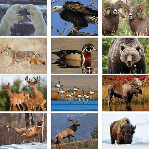 Monthly Scenes of Wildlife 2020 Wall Calendars