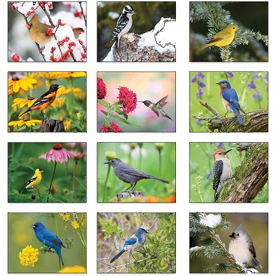 Monthly Images of Backyard Birds 2021 Wall Calendars