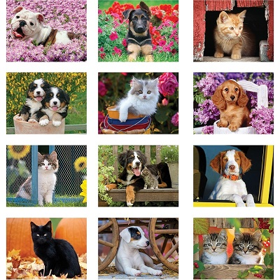 Monthly Images of Puppies and Kittens 2021 Calendar