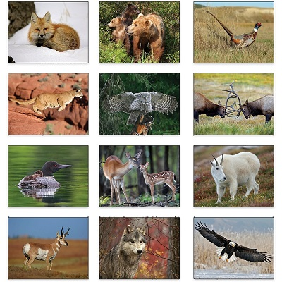 Monthly Scenes of 2021 Wildlife Calendar