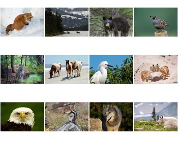 Monthly Scenes of 2021 North American Wildlife Calendar